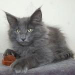 Barnaby (6)