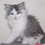 Lynley (4)