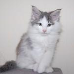 Lynley (5)