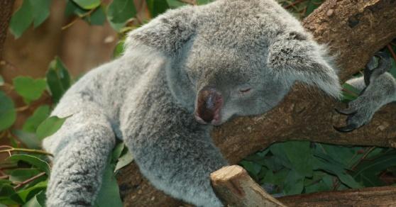 GreatBeing Blogg: 5 steg  för lugn och ro på natten