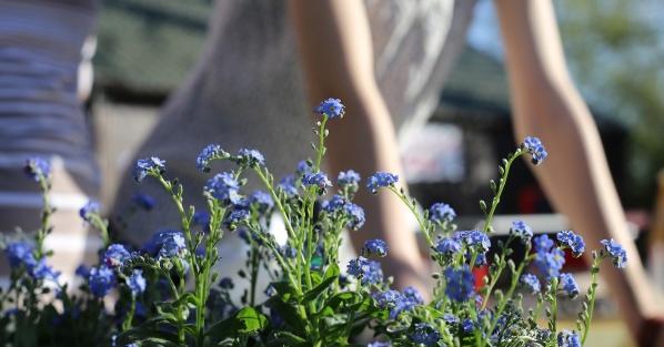 Blogginlägg från GreatBeing: Trädgårdsarbete som meditation