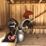 Käpphästar