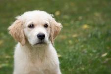 hund hos hundfrisör