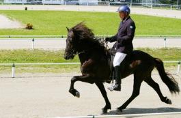 Prins från Knutshyttan VM 2010. Foto Marit Friman