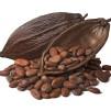 Body Lotion White Chocolate