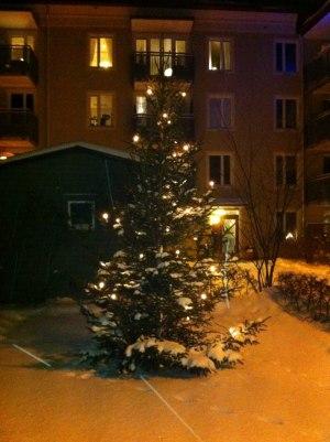 Så då var det vinter igen! 2010 års julgran.