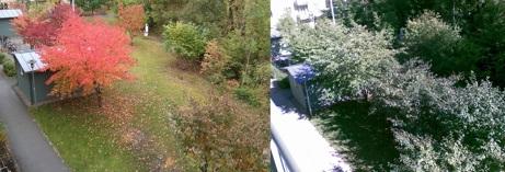 Brf Annandagens trädgård efter respektive före gallringarna som gjordes hösten 2013.