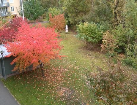 Ett större foto på vår nya rymligare trädgård.
