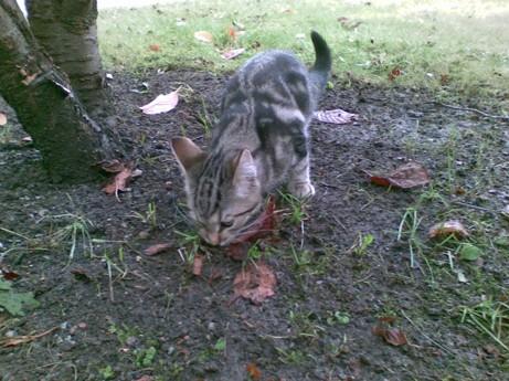 Nyinflyttade medlemmen Pipsan hjälper till med trädgårdsarbetet genom att äta gräs.