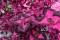 Palettblad rosa