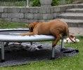 Climbing the trampoline