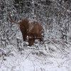 Safir älskar snön