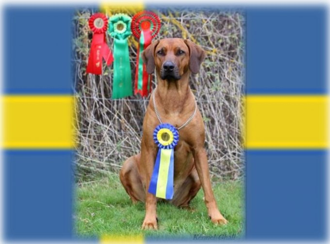 OUR EIGHTEENTH CHAMPION IN THE KENNEL:) Lovely Millie