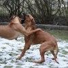 Pippi och Toulose