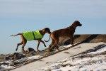 Safir & Yeba på kullen