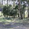 Lottas spårskog