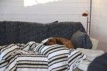 Bästa Asla myser i soffan