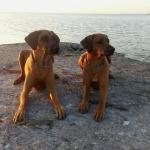 Brunette och Vilja