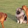 Många olika hundar och raser att hälsa på