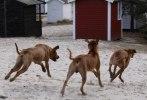 Safir busar med sina små syskon