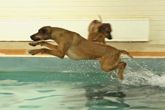 Vilho jumps into the pool on his own
