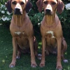 Cenna from our C-litter and Quita from our E-litter