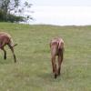Sisters Enza och Tolou