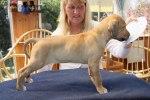 Caspian Puppy 148