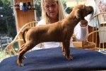 Caspian Puppy 178