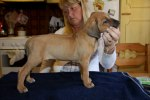 Caspian Puppy 095