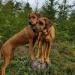 Vilja och Brunette