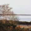 Nära Torekov stranden