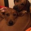 Cenna och Quita