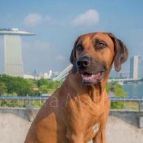 Xavi in Singapore 201509