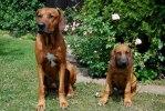 Wilson och sonen Eldar