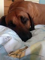 Xavi in my bed