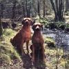 Chim och Yeba syskon