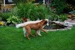 Eldar med en av sina hundkompisar