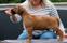 Ridgedogs MadeWithLove Nestor 7 weeks