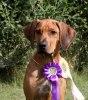 Ghali Excellent Jaidan BOB-puppy