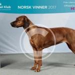 NORSK VINNARE 2017