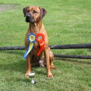 201507 2nd Best male CAC R CACIB