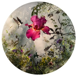 Arcadia 2013, archival C-print photograph, 91,5 cm diameter
