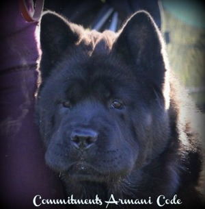 Commitment's Armani Code - Atle