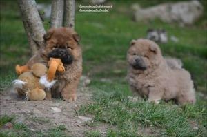 """Dumle och Humle fick leksaker av """"farmor"""" också när hon var på besök.... =)"""