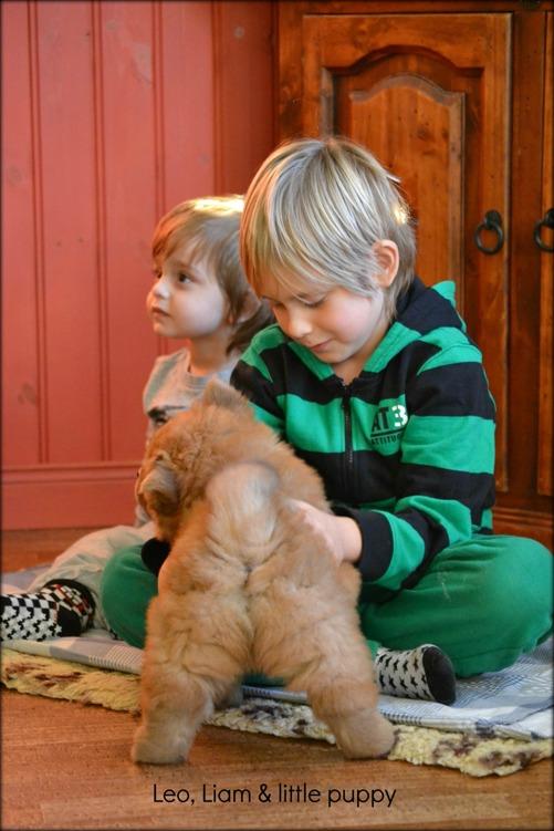 Marcus systers pojkar Leo och Liam med valparna