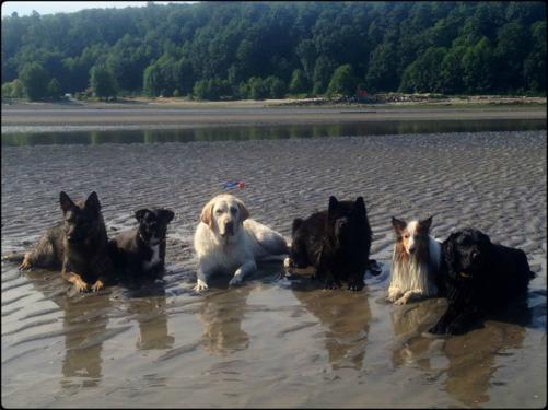 Men i alla upptåg så finns även en lydig och snäll chowhane. Här tillsammans med sina hundvänner i vattnet.