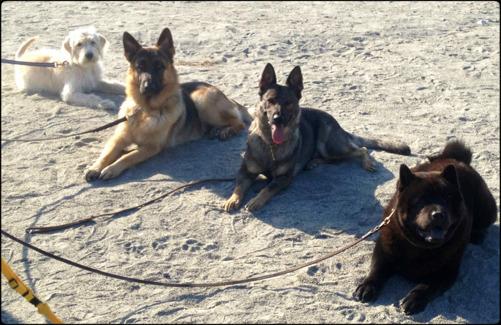 Atticus till höger, tillsammans med sina hundvänner.