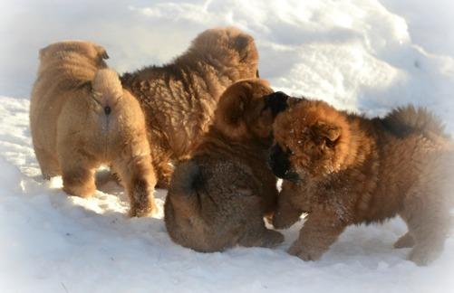 Fyra av vildarna i snön.