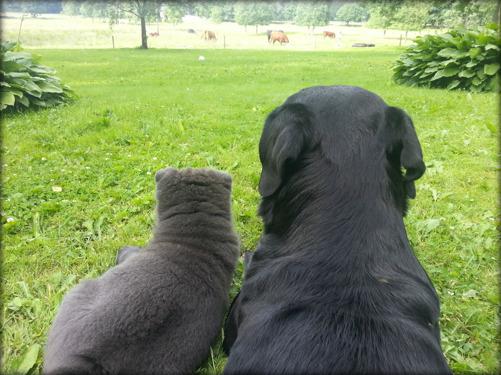 Cooper & Morris